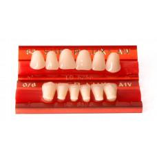 Predné zuby Major Super Lux 6 ks