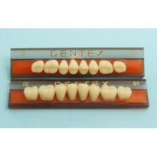 Zijtanden Dentex 8 stuks