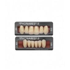 Phonares Type II composiet voortanden. Op aanvraag beschikbaar